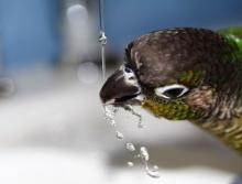 ไขข้อข้องใจ น้ำประปาดื่มได้ ?