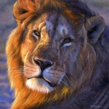 ทำไมสิงโตมีแผงขนรอบหน้าและคอ ?