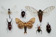 30 เรื่องสุดๆของแมลง