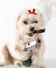 นายทำให้หมาเครียดไม่สบาย พานติดจากคนที่ เครียดไปด้วย