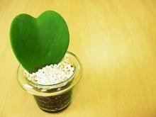 บทความ ดูแลความรัก… คนรัก อยู่เสมอ