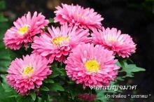 ดอกไม้ประจำเดือนเกิด...ของคุณ