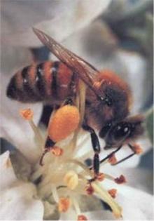 ทำไมผึ้งต้องทำเสียงหึ่งๆ