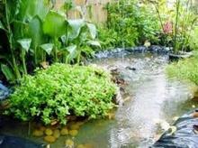 เกร็ดความรู้ วิธีการดูแลต้นไม้หลังน้ำท่วม