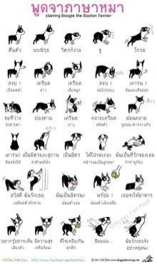 เรียนรู้ภาษากายของ น้องหมา