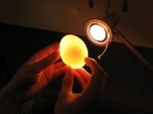 เอาไข่ไปแช่น้ำส้มสายชู แล้วจะเกิดอะไรขึ้น??
