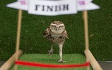 เก๋ๆ !! สวนสัตว์อังกฤษ จัดแข่งกีฬาสัตว์
