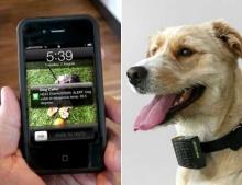 Dog Caller น้องหมาก็ส่ง SMS ถึงคุณได้