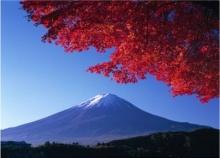 ประชากรในโตเกียวจะเหลือเพียงครึ่งในอีก 88 ปีข้างหน้า