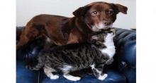 สุดซึ้ง สุนัขตาบอดเดินได้เพราะแมวบอกทาง