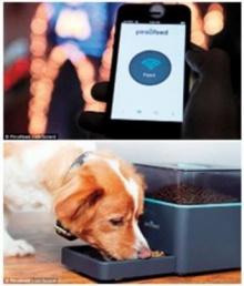 เครื่องให้อาหารหมาทางไกล สะดวกสั่งผ่านสมาร์ตโฟน
