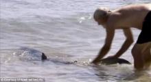 ฉลามบุกชายหาด เฒ่าวัย62ปี-เดินไปลากหางลงทะเลเฉย