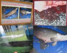 ว่อนเน็ต! ปลาในวัดตาย ผ่าท้องมามีแต่เศษเหรียญ