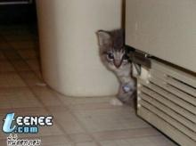 โรคที่มากับแมว