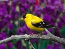 นกแสนสวยกับถั่วของอาบัง