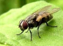 รู้มั้ย ทำไม เราตบแมลงวันไม่เคยทัน