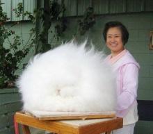 แองโกล่า กระต่ายพันธุ์ขนปุยที่สุดในโลก