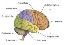 10 นิสัย ทำลายสมอง