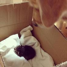 โกลเด้น เลี้ยงลูกแมว น่ารัก ฝุดๆ