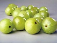 มะขามป้อม ผลไม้ ใน ตำนานอินเดีย