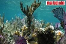ขุมพลังต้านเอชไอวีซ่อนอยู่ในแนวปะการัง