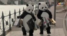 คนจีนหน้าชา CCTV ปล่อยโฆษณา แพนด้า เตือนสติจะเที่ยวต้องมีมารยาท