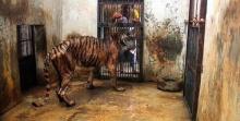 ช็อค!! เปิดขุมนรกบนดิน…สวนสัตว์สุดสลด