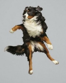"""รวมภาพถ่าย """"หมาบิน"""" เจ้าตูบขนฟูฟ่องลอยคว้างกลางอากาศ!"""