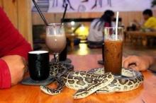 ร้านกาแฟประหลาด! จัดสัตว์เลื้อยคลานให้ลูกค้าลูบเล่น