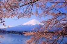 """7 สุดยอดที่เที่ยวชม """"ดอกซากุระบาน"""" ที่ประเทศญี่ปุ่น ประจำปี 2015"""