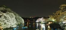 Tokyo: ซากุระกลางคืนที่สวน Chidorigafuchi