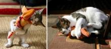 20 ภาพของเหล่าสัตว์เลี้ยงสุดน่ารัก ที่โตมาพร้อมกับ ของเล่น ของมัน
