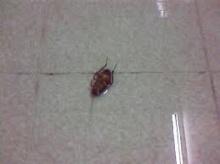 กำจัดแมลงสาป ในห้องน้ำ ให้สิ้นซาก