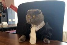 เก๋ๆชิคๆ!!! บริษัทนี้จ้างน้อง แมว เป็นผู้อำนวยการ เริ่ดเวอร์!? (มีคลิป)