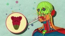 """ทำไมคนเราติดรสหวาน? ดูคลิปนี้แล้วจะเข้าใจ""""น้ำตาล"""" ทำอะไรกับสมอง ?"""