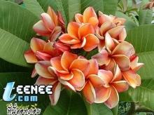 ดอกไม้สวยๆๆๆๆ...จ้า