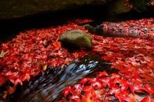 ห้ามพลาด!! ปีละครั้ง เมเปิ้ลสีแดง ที่น้ำตกถ้ำใหญ่