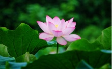 ความรู้ ดอกไม้บูชาพระ แต่ละชนิดเสริมสิริมงคลอย่างไร...