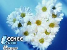 ดอกไม้กับก้อนหิน...