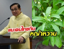 หญ้าหวาน มีประโยชน์ยังไง? ทำไม บิ๊กตู่ แนะให้คนไทยใช้ปรุงอาหารแทนน้ำตาล
