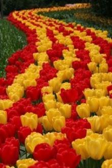 ทายใจ จากดอกไม้ที่อยากได้