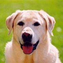 ขำขัน : ชายตาบอดกับหมาคู่ใจ