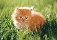 ทำไมแมวไม่ชอบรสหวาน