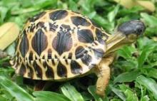 (ขำ ขัน) เต่า