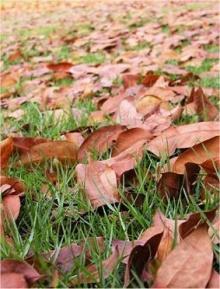 ใบไม้ร่วง