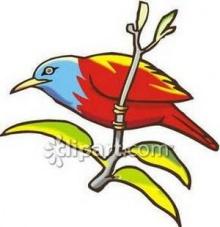 ขำขำ : นกขุนทองร้องพี่ ?