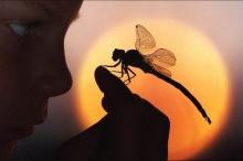 ♥ นิทาน : ความรักของแมลงปอ ♥