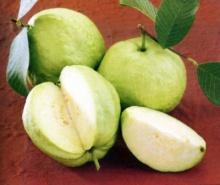เฉาะฝรั่งพบเป็นผลไม้ยอดเยี่ยม มีวิตามินซี มากกว่าส้ม 5 เท่า