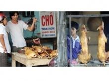 สลดชะตากรรมสุนัข เหยื่อจานเด็ดในเวียดนาม