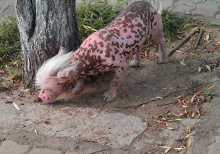 ชาวจีนตื่น สัตว์ประหลาดโผล่ในหมู่บ้าน!